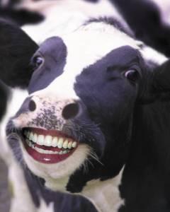 Milkchecker(tm) Mastitis Detector