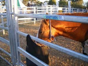 Equine Smart Yards