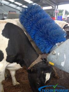 Cow Brush