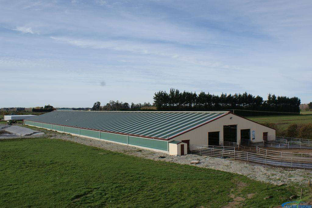 Cowhouse 600 cows linked to Dairyshed