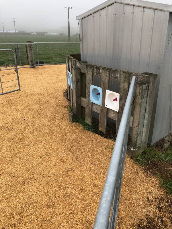 Two feed stations per pen, all clean and tidy